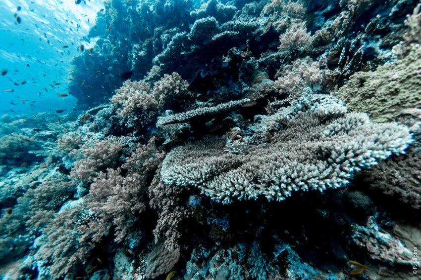 Corail - Plongée sous-marine - Egypte
