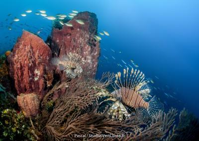 Paysages sous-marins
