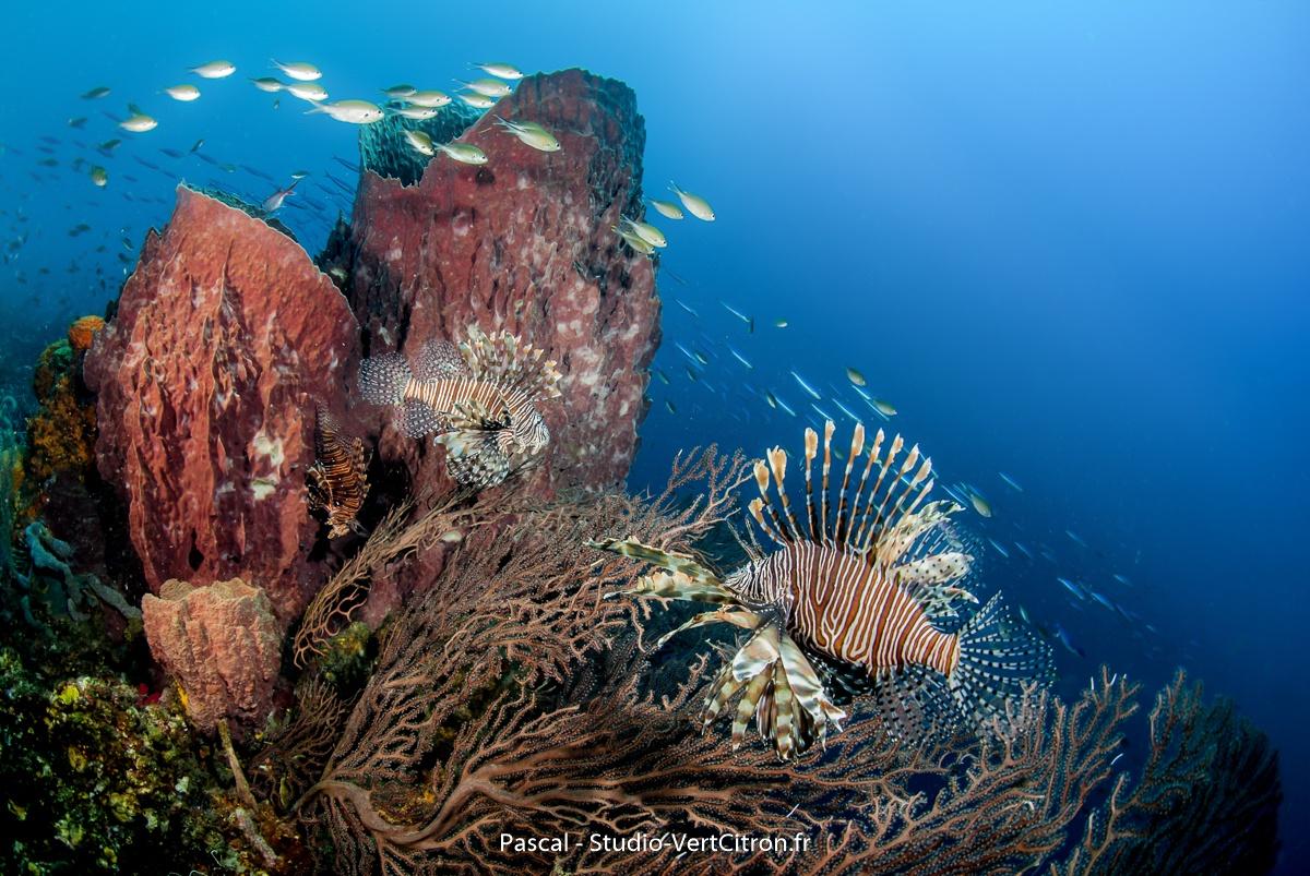 Martinique Janvier 2016 - Paysage sous-marin