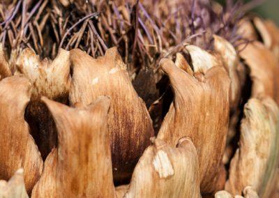 Les pétales de l'artichaut