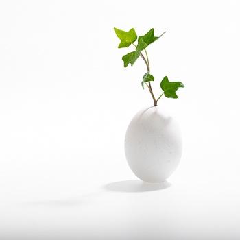 Comment naissent les arbres ?