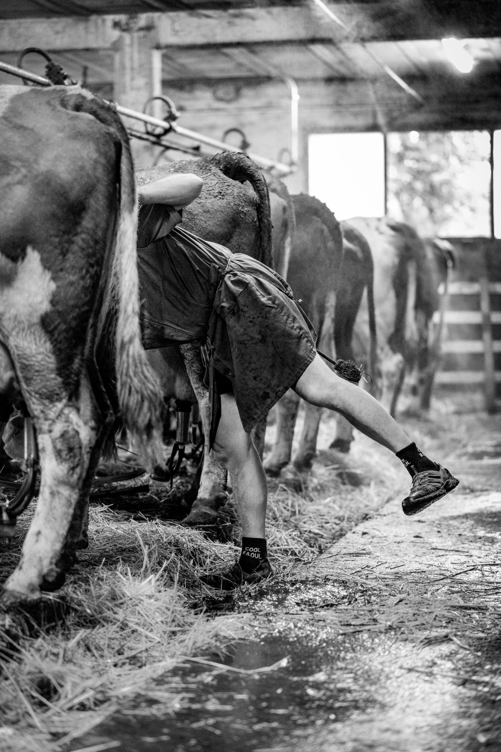 Une journée à la ferme - Gaec de la Pierre Blanche -  Autrans-Méaudre en Vercors - Isère